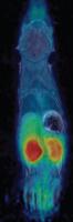 Molecular Imaging 5