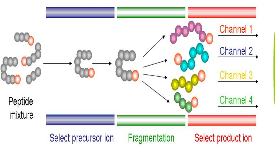 LC-MS2 selection of protein fragments - drug transporters
