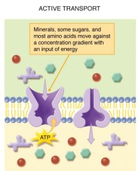 Signal transduction proteins definition